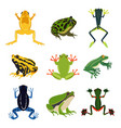 exotic amphibian set different frogs in cartoon vector image