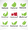 Leaf Natural vector image vector image