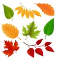Autumn colors leaves set vector image
