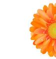 Orange Gerber With Water Drop vector image