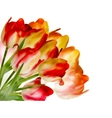 Beautiful flowers made with color filters EPS 10 vector image