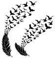 feathers with flying birds vector image vector image
