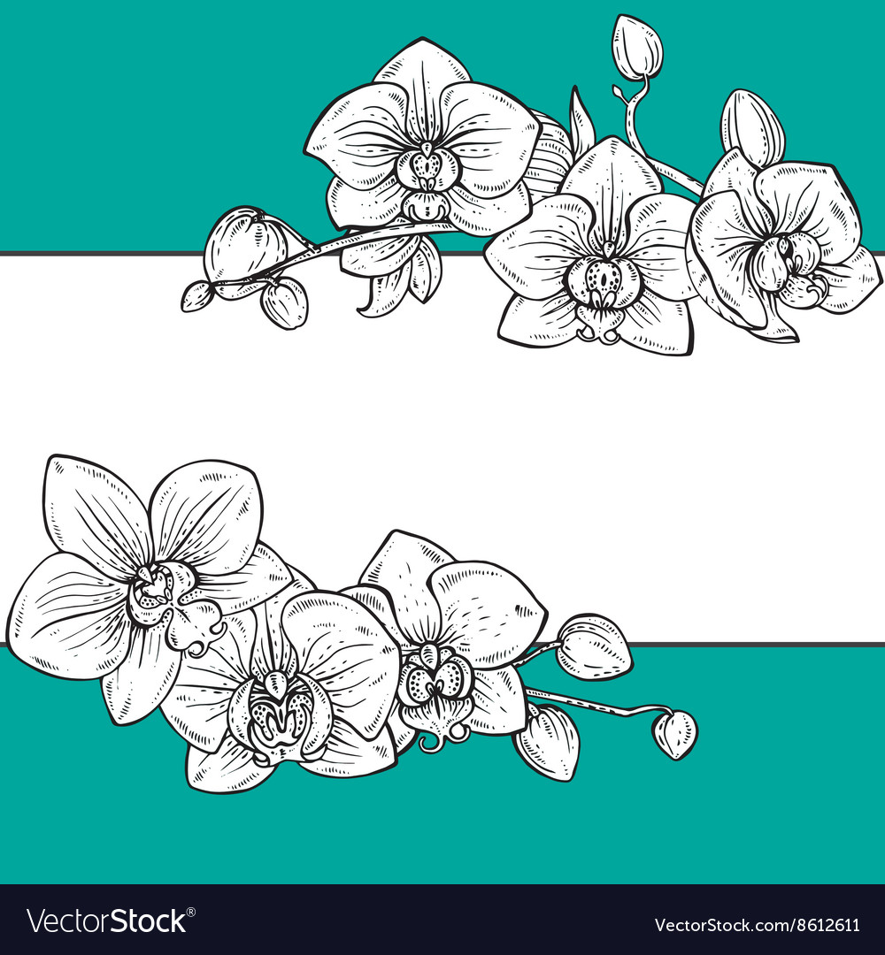 Beautiful floral frame with orchid flowers vector