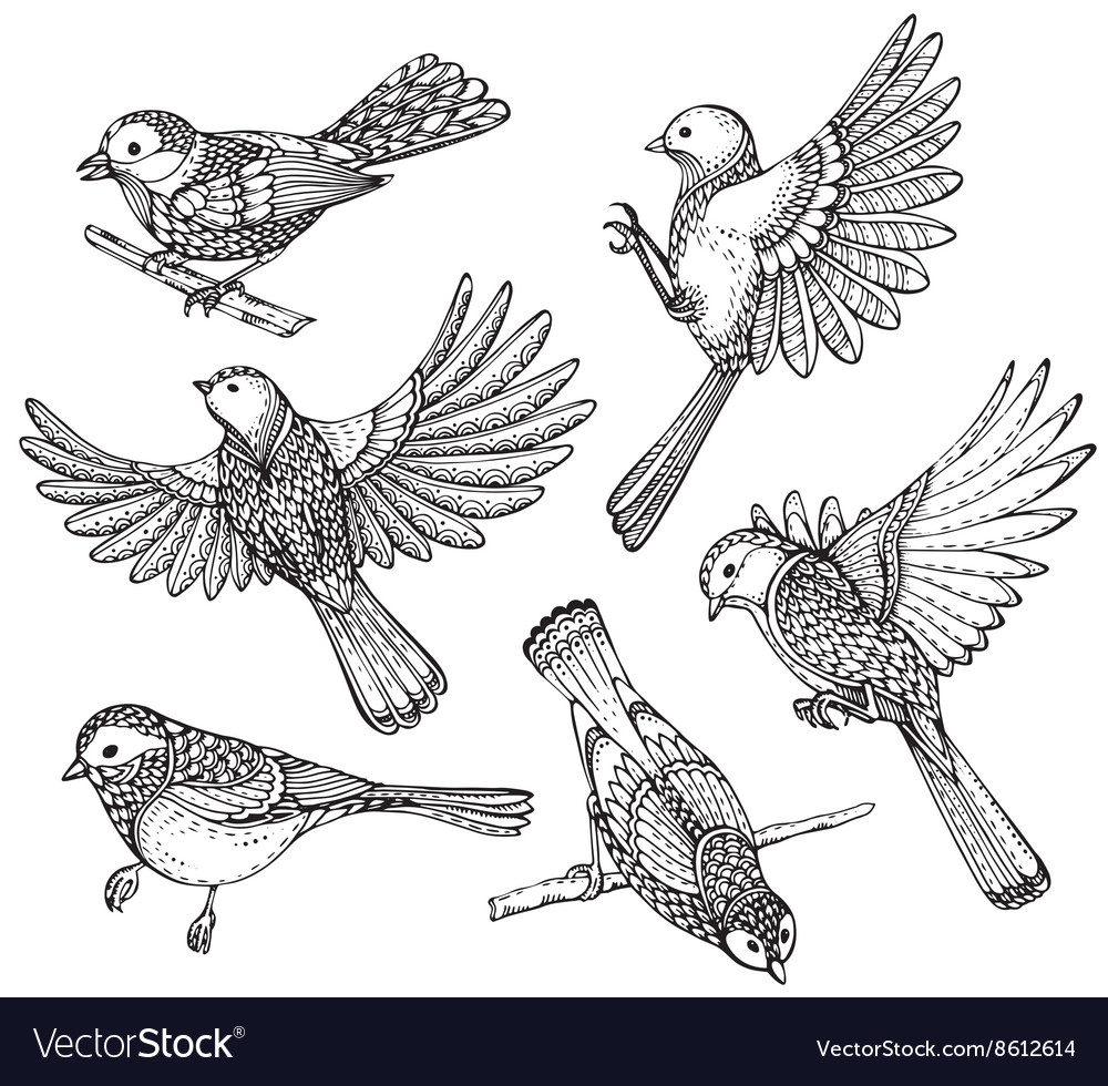 Ste of hand drawn ornate birds vector