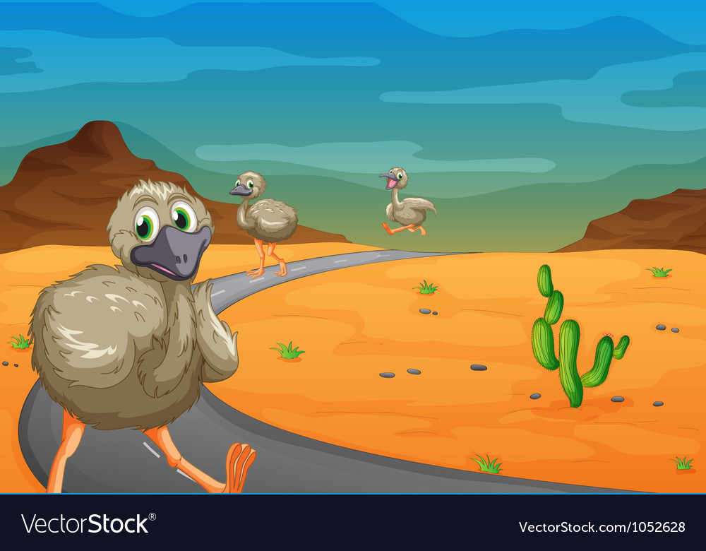 Emu in desert vector