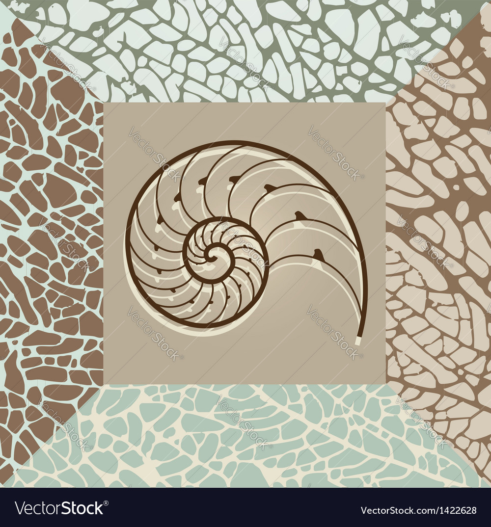 Nautilus shell background vector