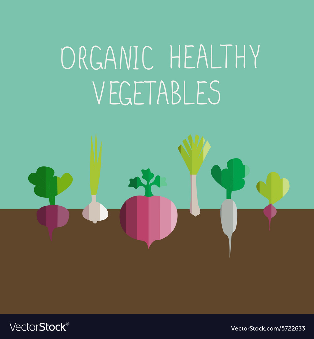 Growing vegetables in modern flat design vector