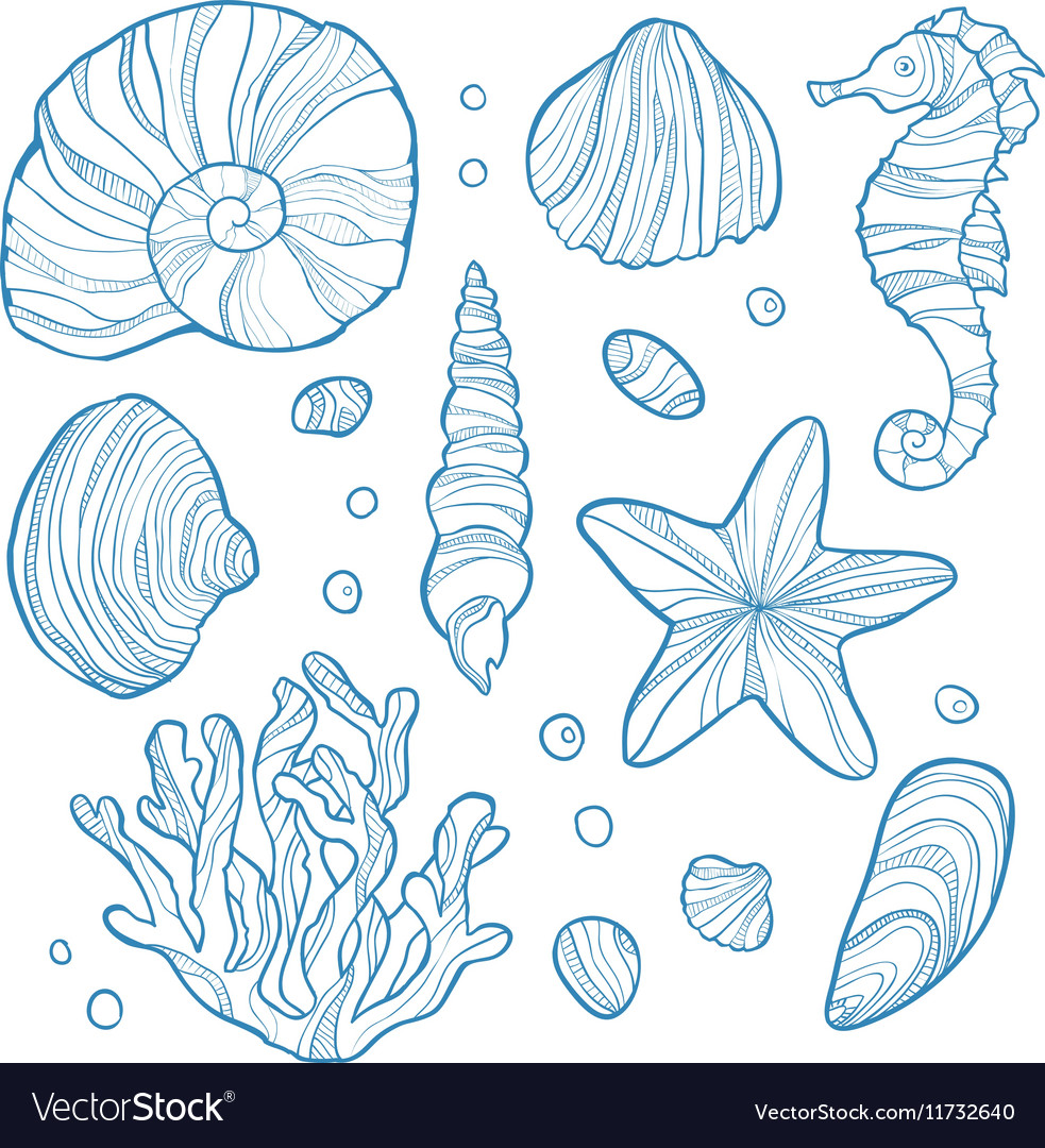 Set seashell coral seahorse starfish and rocks vector