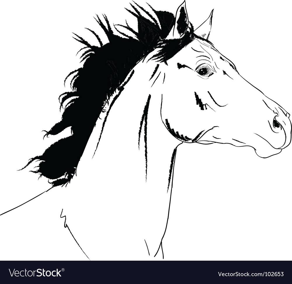 Arab horse head vector