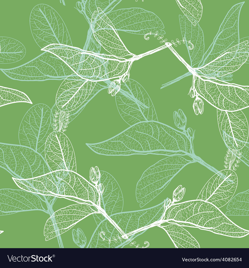 Leaves contours on green background floral vector