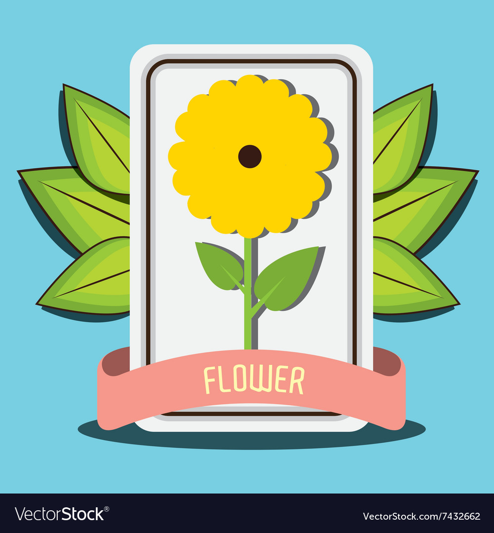 Flowers graphic design vector