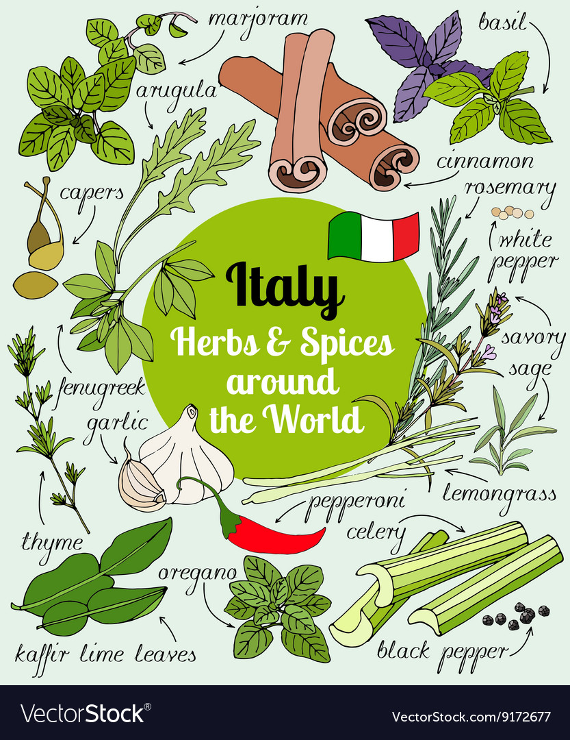 Italy herbs and spices vector