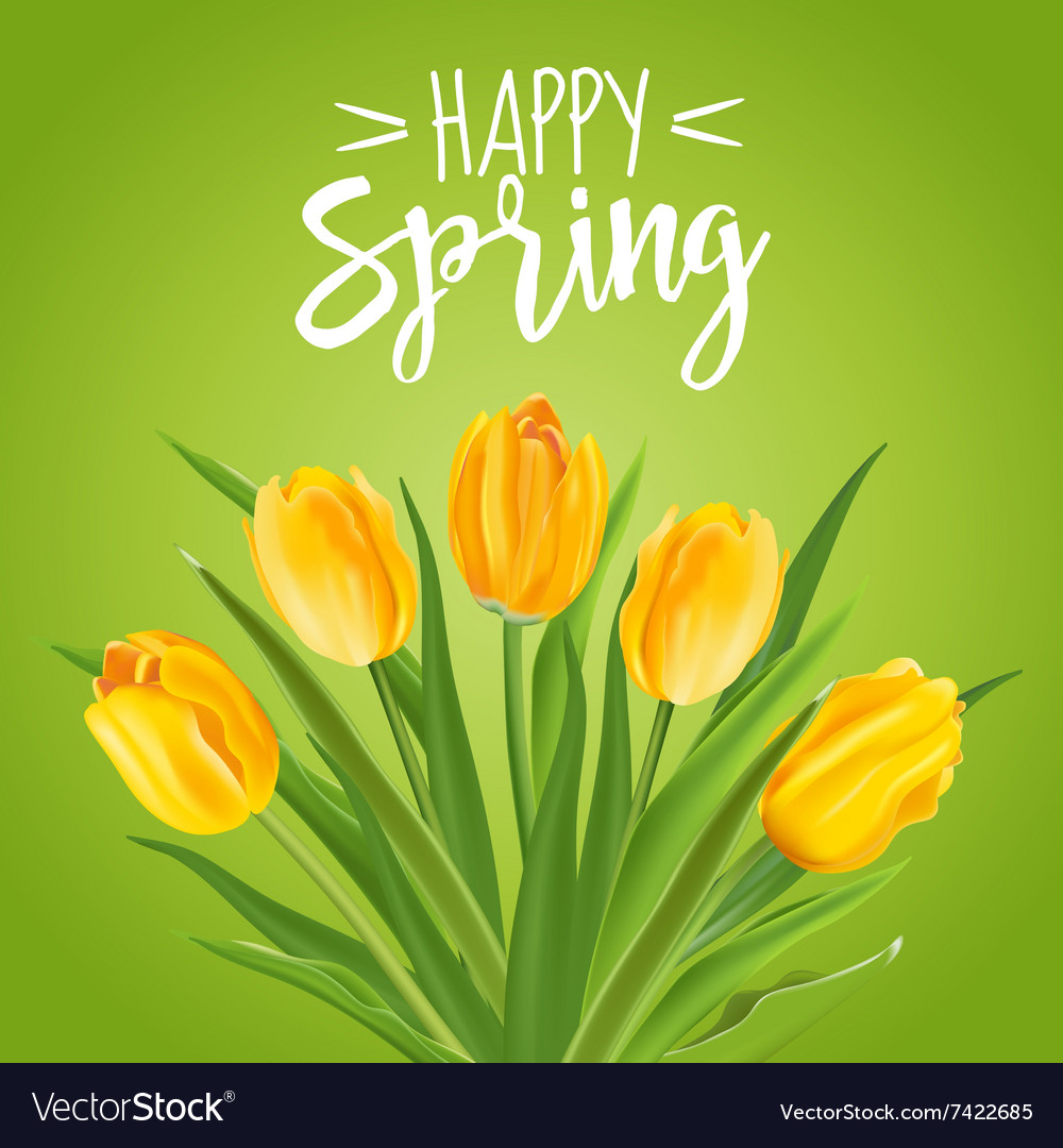 Spring flower background  with tulips vector