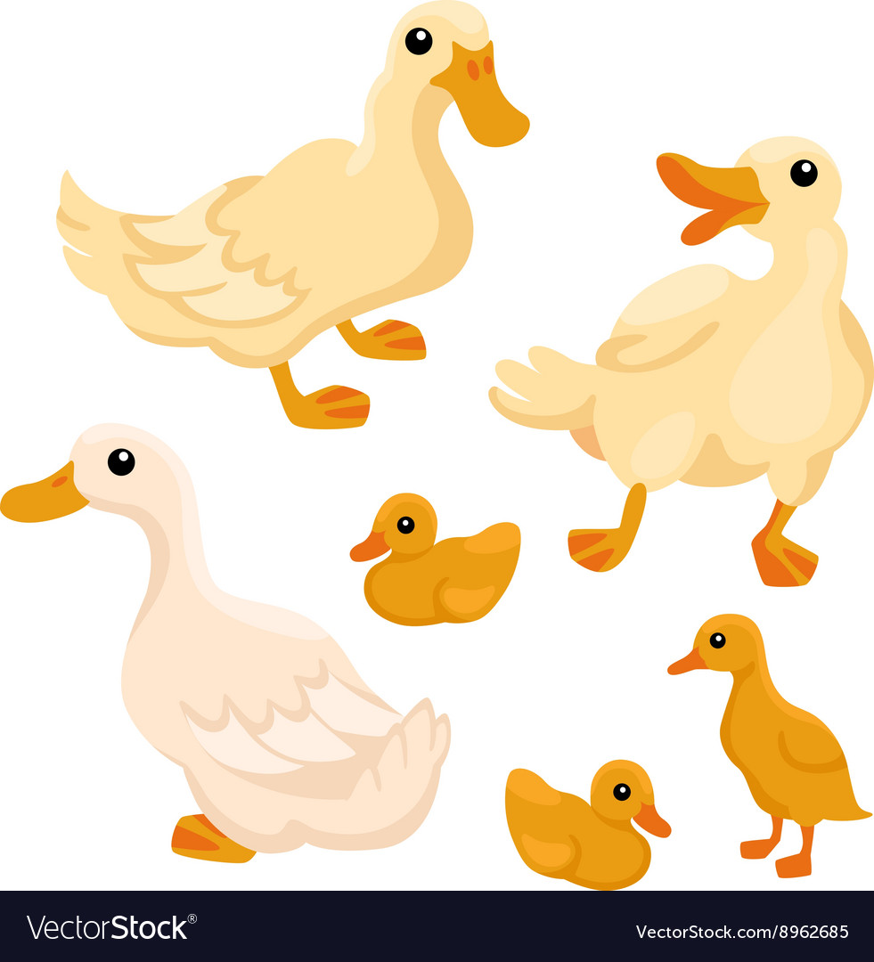 Tree white adult ducks with tree ducklings vector