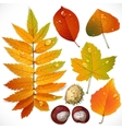 yellow and red autumn leaves and chestnut vector image