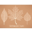 Skeletonized leaves collection vector image