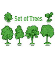 set plants trees and bushes vector image vector image