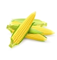 Corn Cobs Realistic vector image