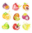set of colorful watercolor fruits vector image