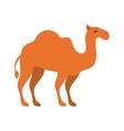 animal figure of camel cartoon vector image