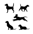 Breed of a dog beagle silhouettes vector image