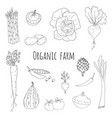 hand drawn doodle vegetables icons isolated set vector image