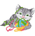 gray kitten playing vector image