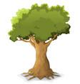 spring oak tree vector image