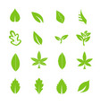 green leave icons set vector image