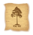 Pine Tree on Old Paper vector image