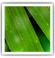 macro leaf vector image vector image