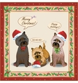 Cairnterrier Card vector image