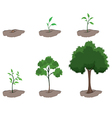 Stages of a tree vector image