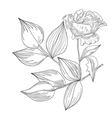 Decorative Rose flowers vector image