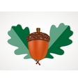 Acorn with Leaves Autumn vector image vector image