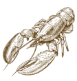 engraving lobster vector image