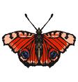 european peacock butterfl vector image