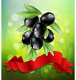 black olive branch with red ribbon vector image