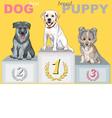 smiling puppy dog champion on the podium vector image