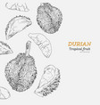 set of durian sketch vector image