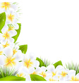 Frangipani Flowers Borders With Leaf vector image