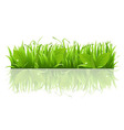 Grass And Leafs vector image