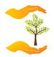 Hands care a tree vector image vector image