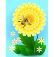 Bee on yellow flower collects honey and pollen vector image