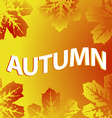 Autumn leaves on the sky background vector image
