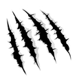 Claws scratches on white background vector image