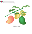 Fresh Mango A Famous Fruit in Bangladesh vector image