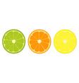 citrus fruit slices icon vector image