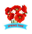 spring time poppy flowers greeting poster vector image