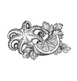 octopus ink sketch vector image